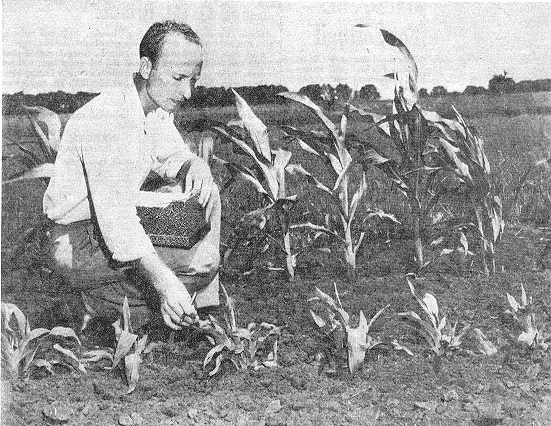 Earl Patterson with the first COOP crop at UIUC